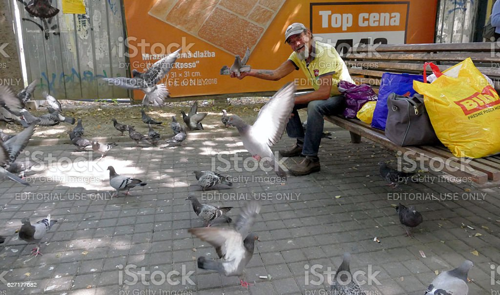 Man feeds birds and pigeons at the park stock photo