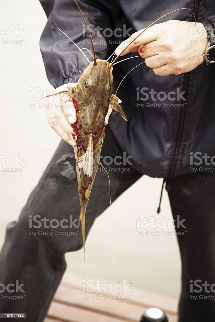 Man Fishing royalty-free stock photo
