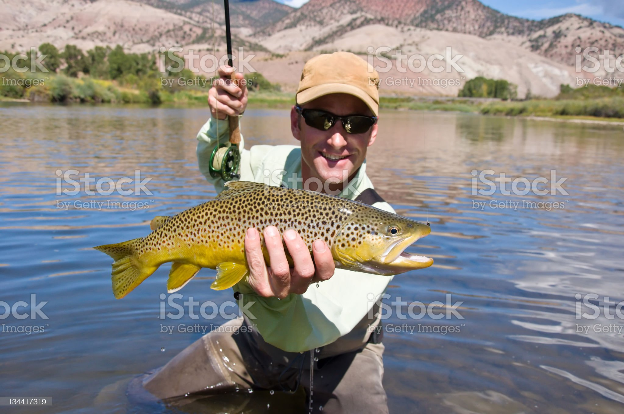 Man Fly Fishing Catches Trout royalty-free stock photo