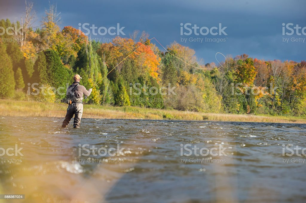 Man fly fishing in the fall in a river stock photo