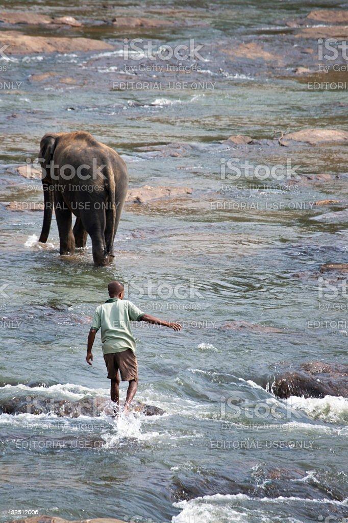 Man follows elephant in river stock photo
