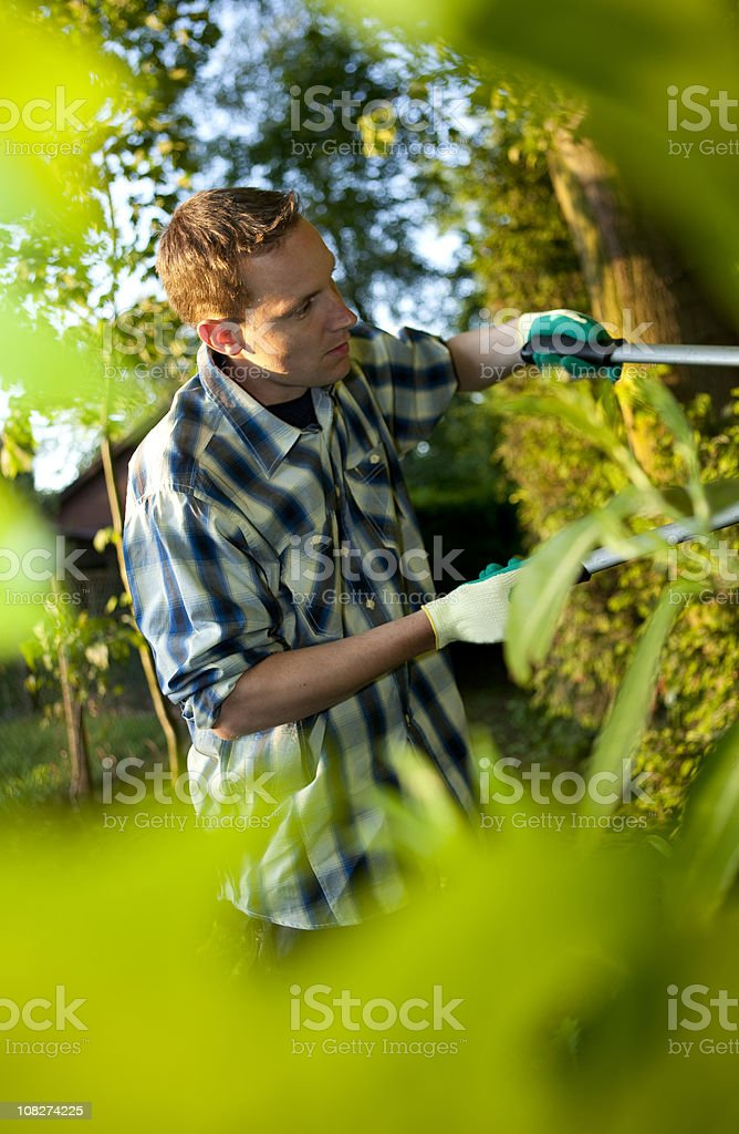Man Gardening and Pruning Bushes with Shears royalty-free stock photo