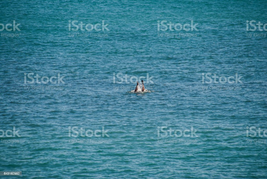 Man going under water stock photo
