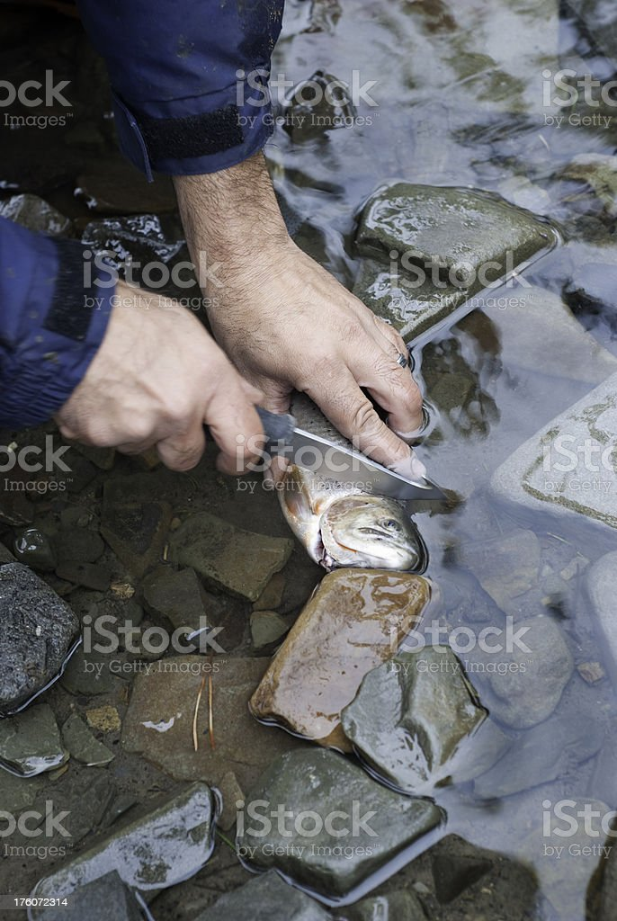 Man Gutting a Trout royalty-free stock photo