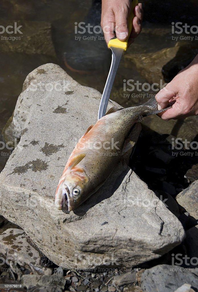 Man Gutting Fish royalty-free stock photo