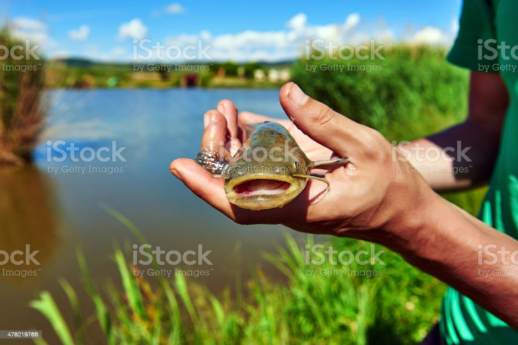 man hands holding catfish stock photo
