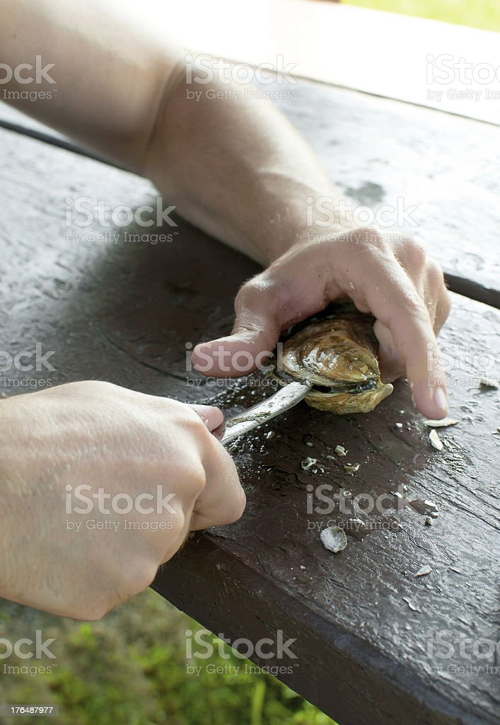 Man hands shucking oysters on picnic table royalty-free stock photo