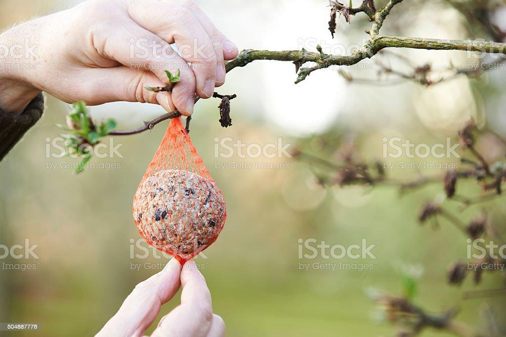 Man Hanging Bird Food In Winter Garden stock photo