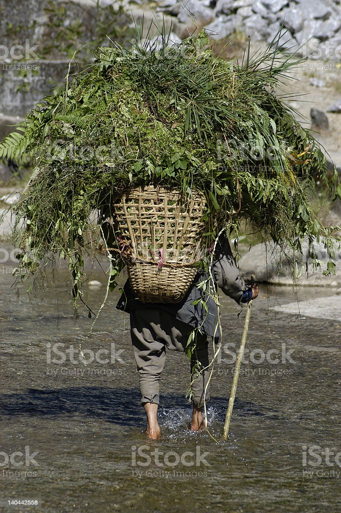 Man Hauling Vegetation in Basket royalty-free stock photo