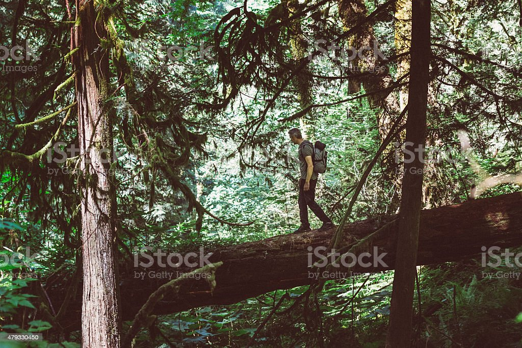 Man hiker with backpacking explores the forest stock photo