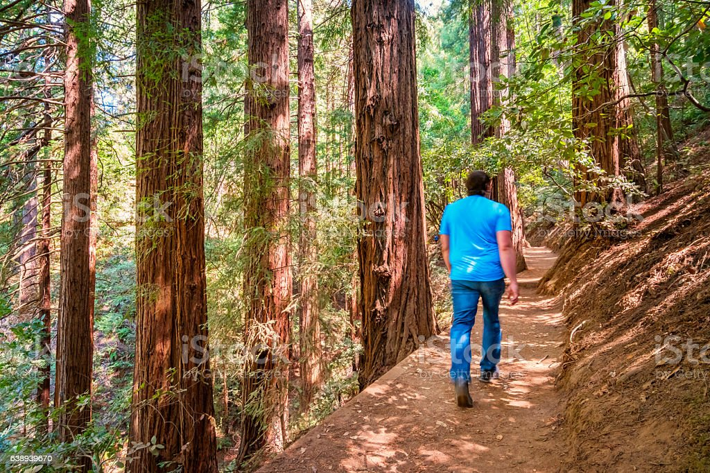 Man Hikes Beside Redwood Trees Muir Woods National Monument California stock photo