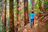 Man Hikes Beside Redwood Trees Muir Woods National Monument California