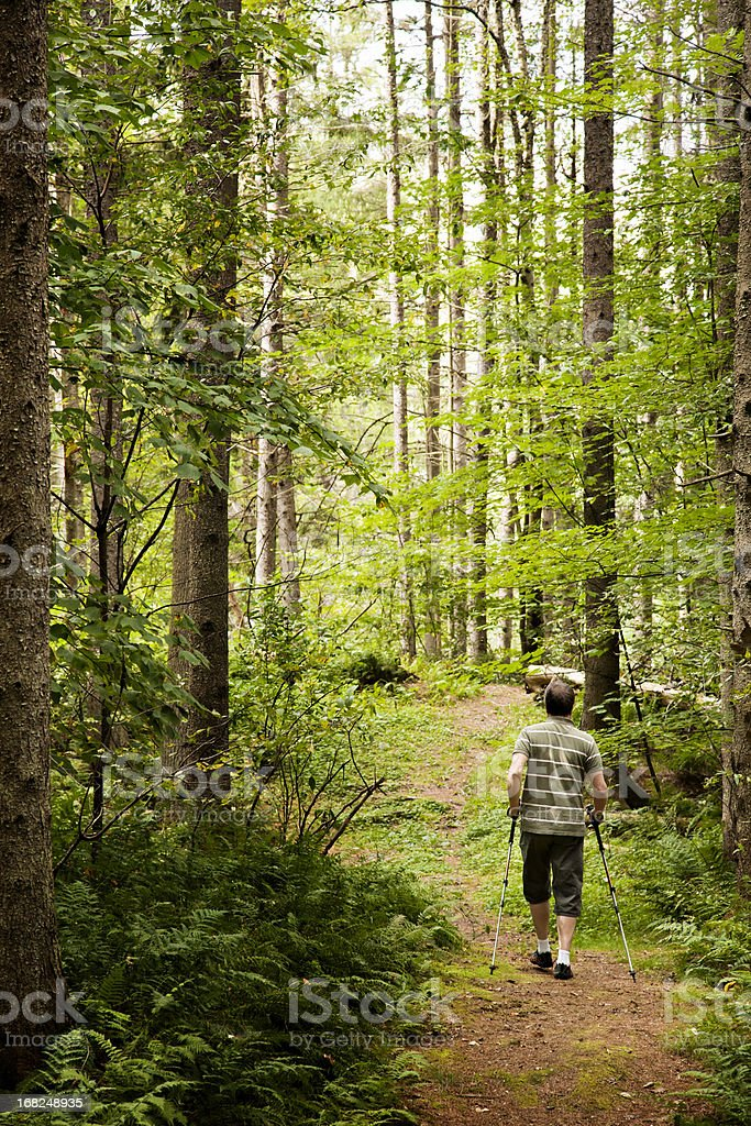 Man hiking into a northern forest clearing stock photo