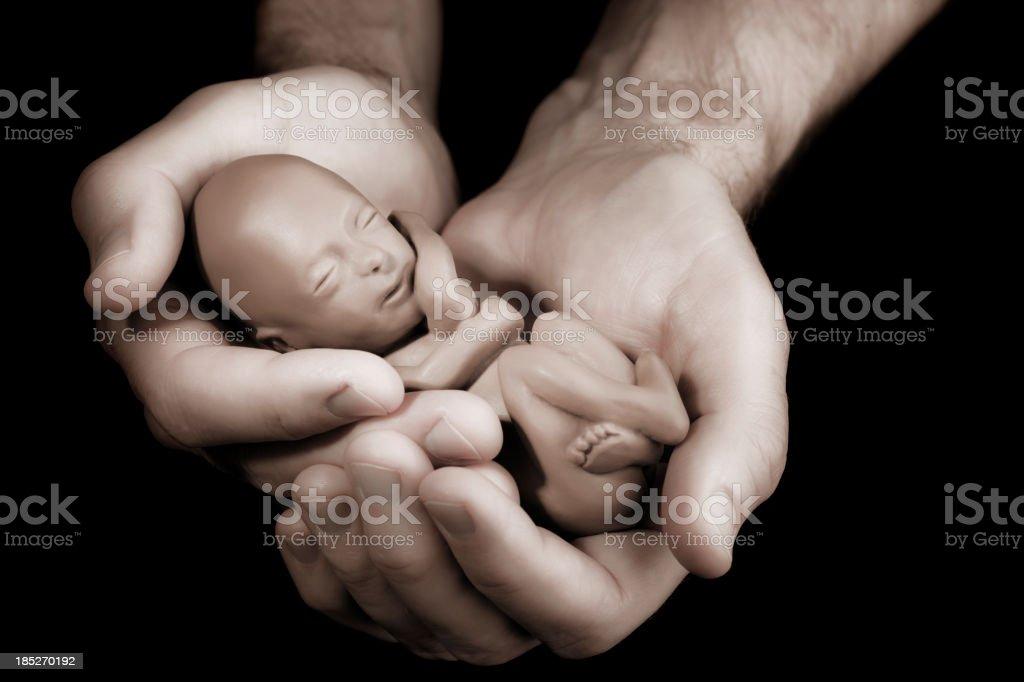 Man Holding 12 Week Model Fetus stock photo