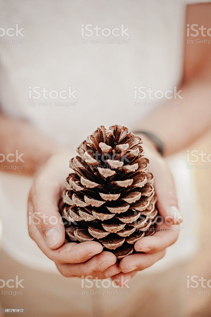 Man holding a pine cone stock photo
