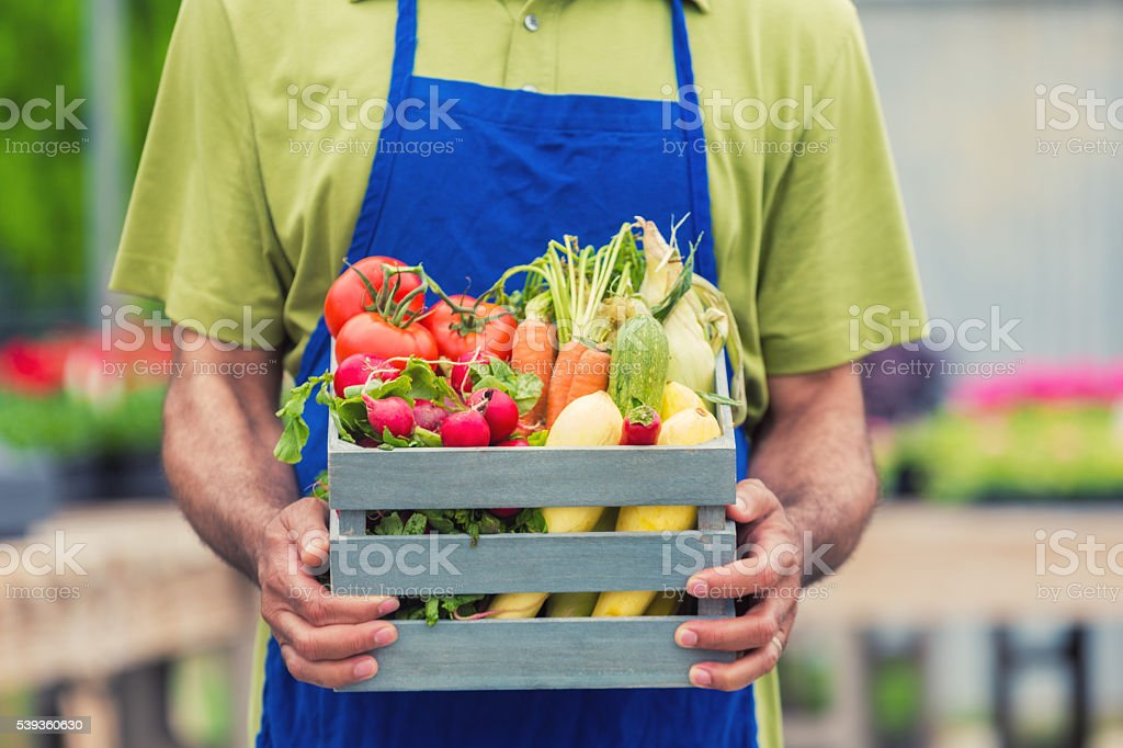 Man holding basket full of fresh summer vegetables stock photo