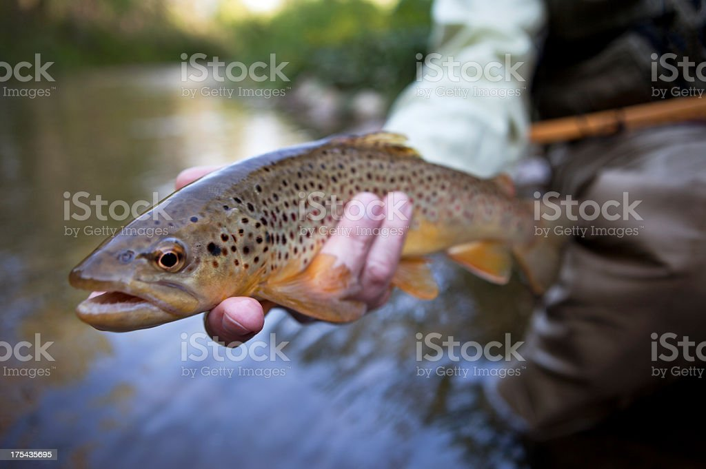 Man Holding Brown Trout Before Releasing It. royalty-free stock photo