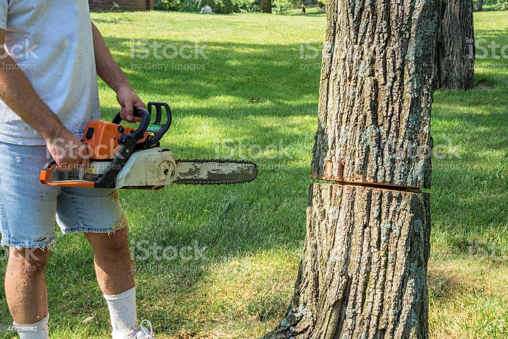 Man holding chain saw next to tree with partial cut stock photo