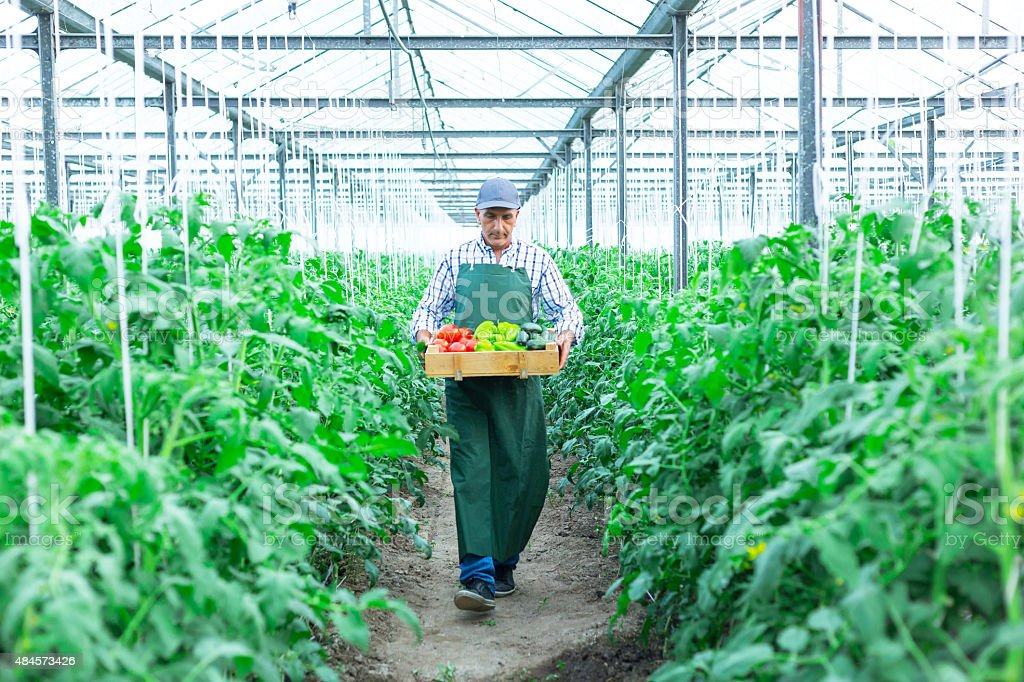 Man Holding Crate Of Fresh Vegetables stock photo