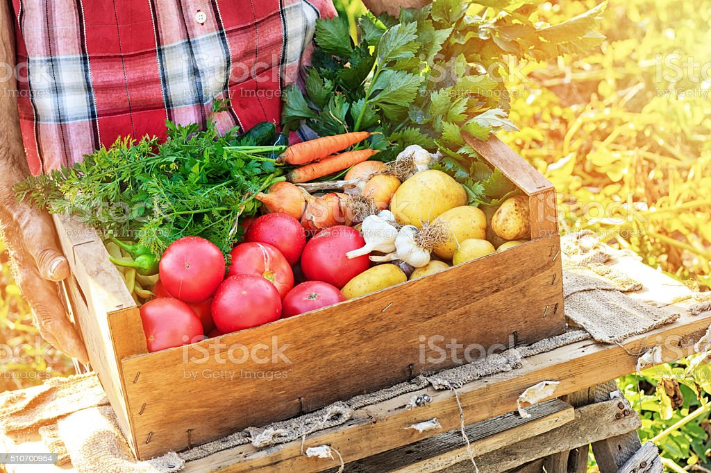 Man holding crate with fresh vegetables stock photo