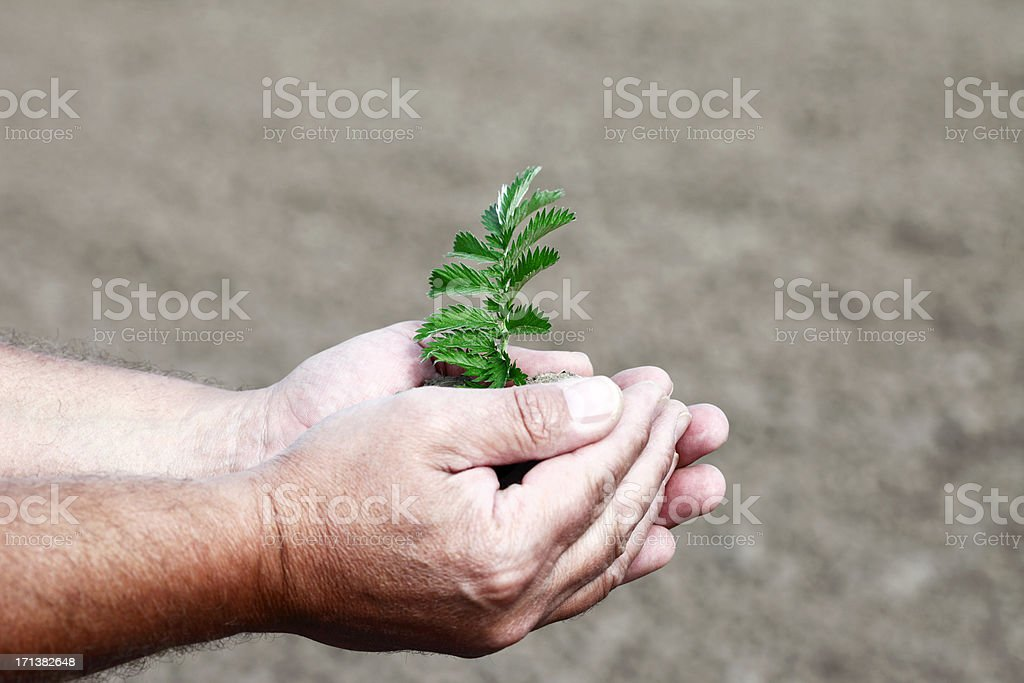 Man Holding Dirt in Hands with Plant royalty-free stock photo