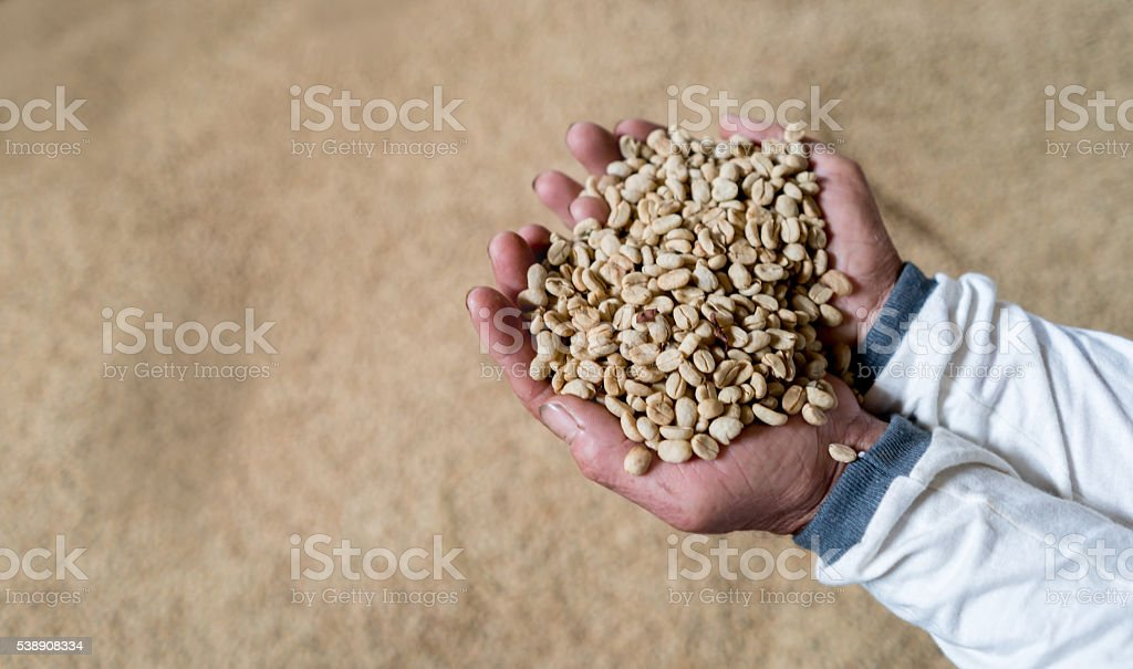 Man holding dry beans of coffee stock photo