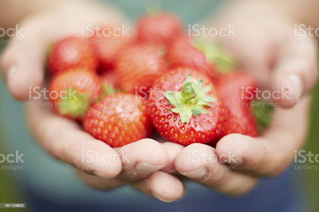 Man Holding Freshly Picked Strawberries royalty-free stock photo
