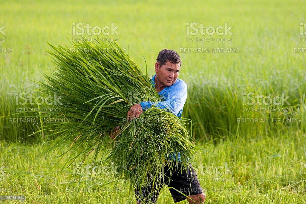Homme tenant herbe photo libre de droits