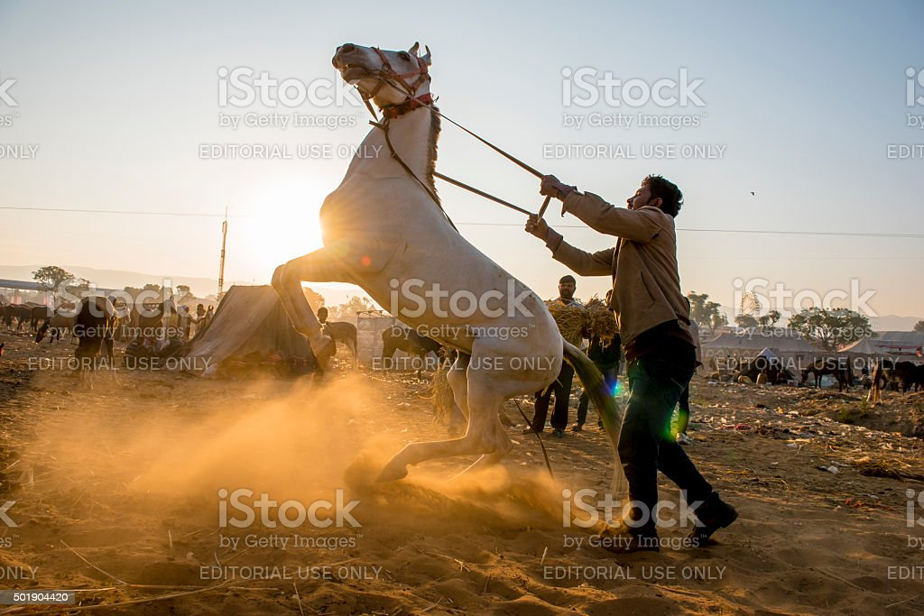 Man holding horse standing at sunrise moment, India stock photo