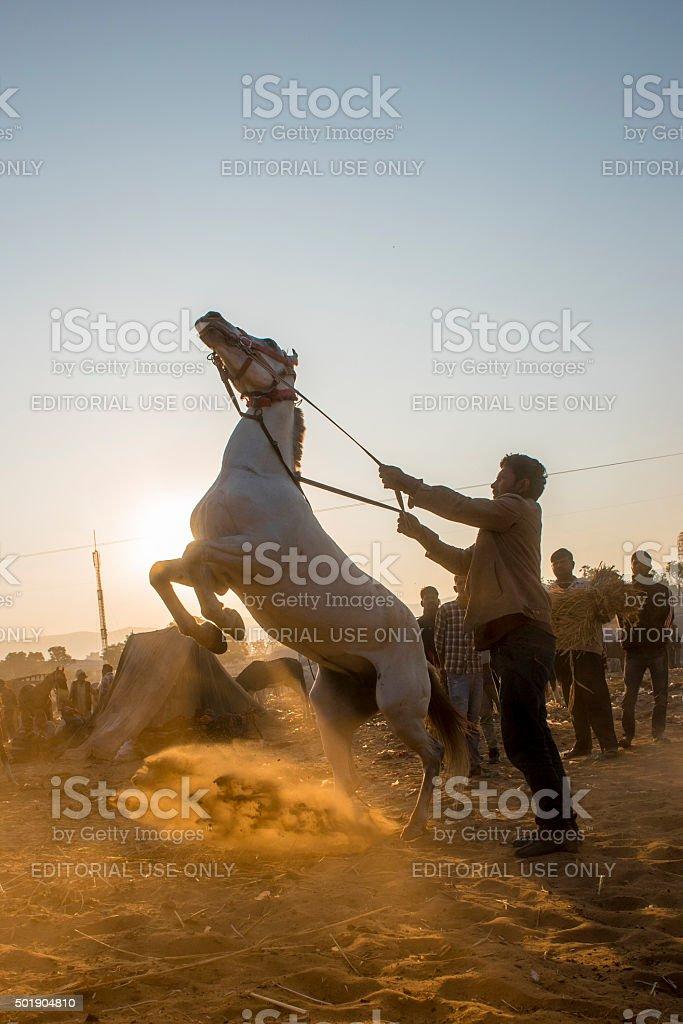 Man holding horse standing at sunrise moment, India stock photo