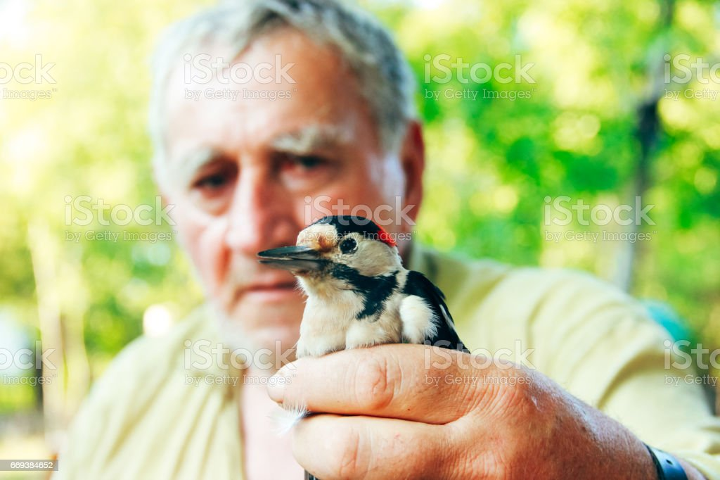 man holding in hand a woodpecker stock photo
