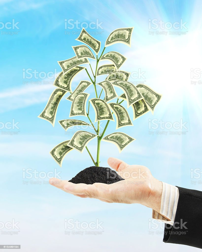 Man holding money tree on his palm. Concept of wealth stock photo