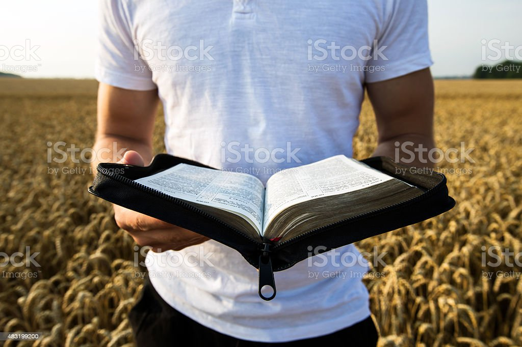 Man holding open Bible in a wheat field stock photo