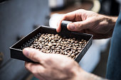 Man holding tray of fresh coffee beans, close up