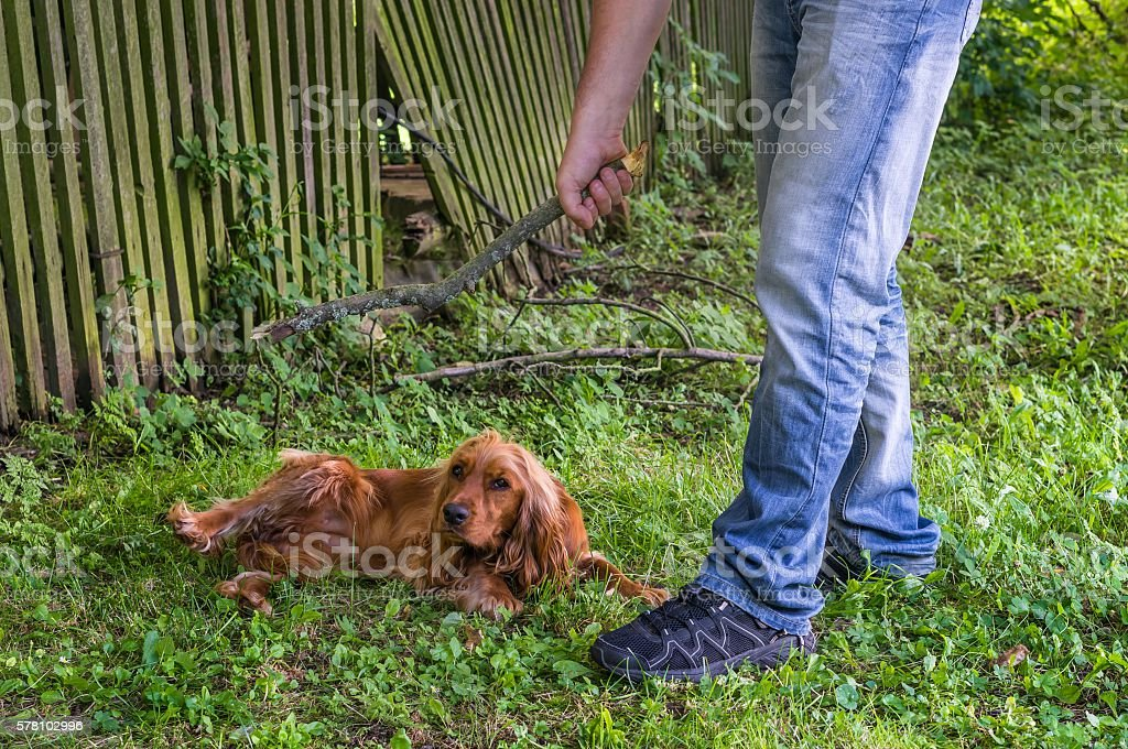 Man holds a stick and wants to hit the dog stock photo