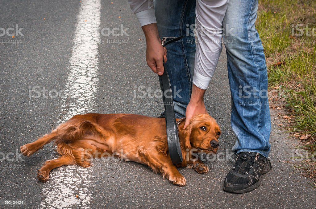 Man holds belt and he wants to hit the dog stock photo