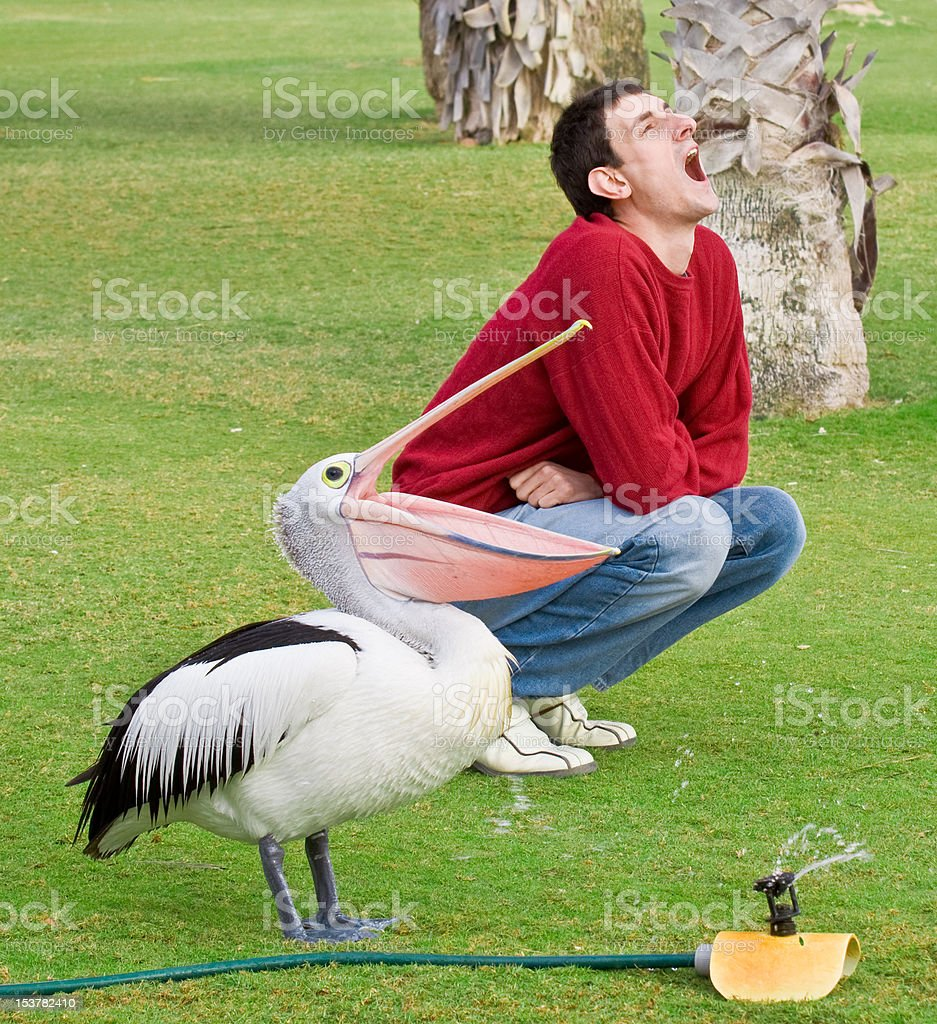 Man imitating a pelican stock photo