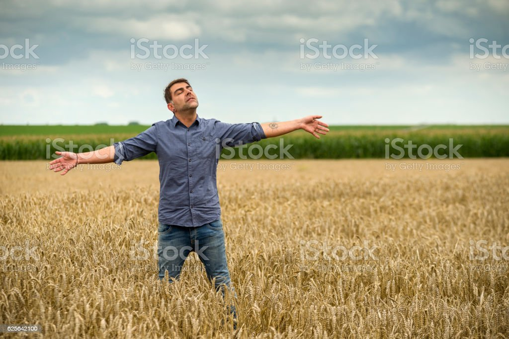 Man in a wheat field, arms outstretched stock photo