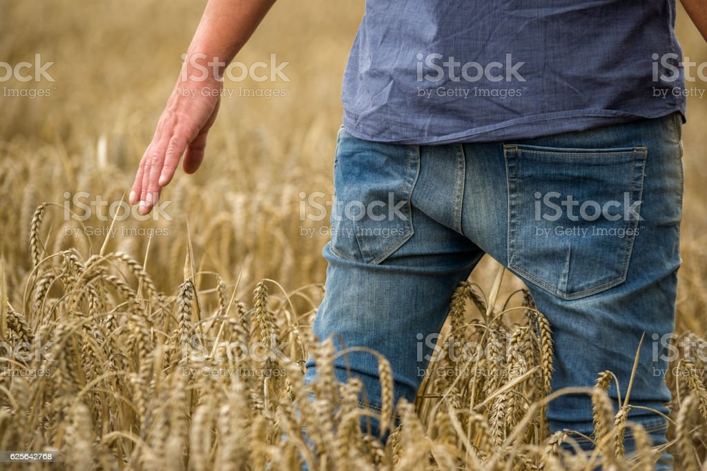 Man in a wheat field, close-up stock photo
