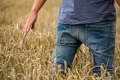 Man in a wheat field, close-up