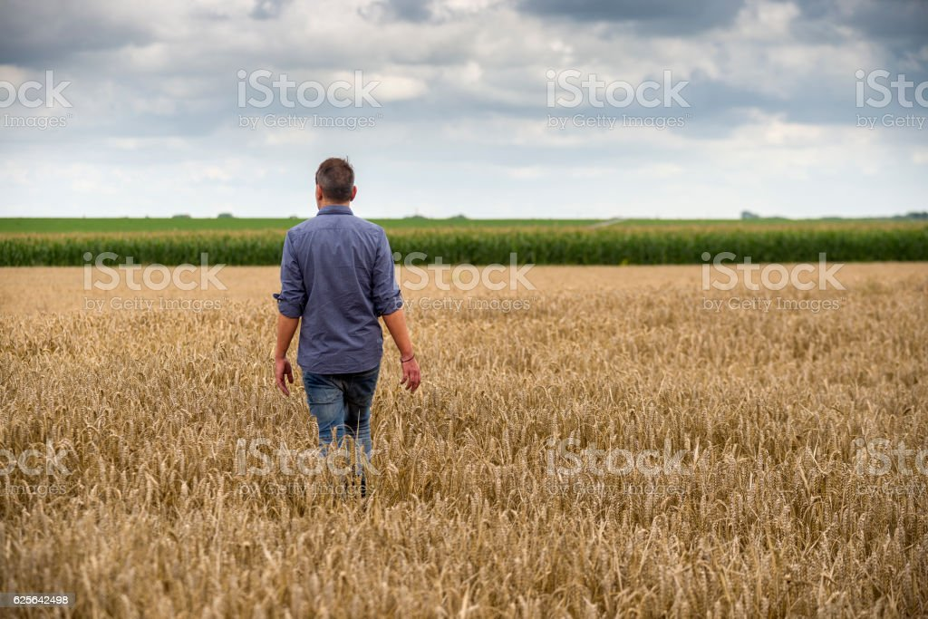 Man in a wheat field stock photo