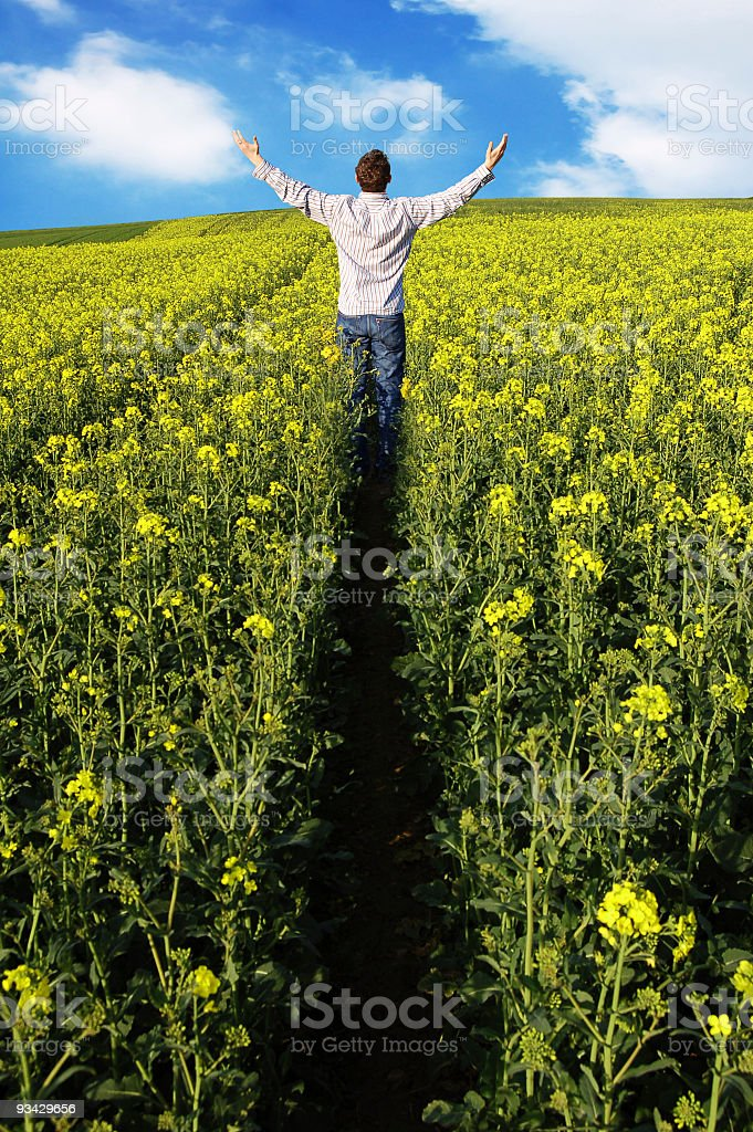 Man in Field royalty-free stock photo