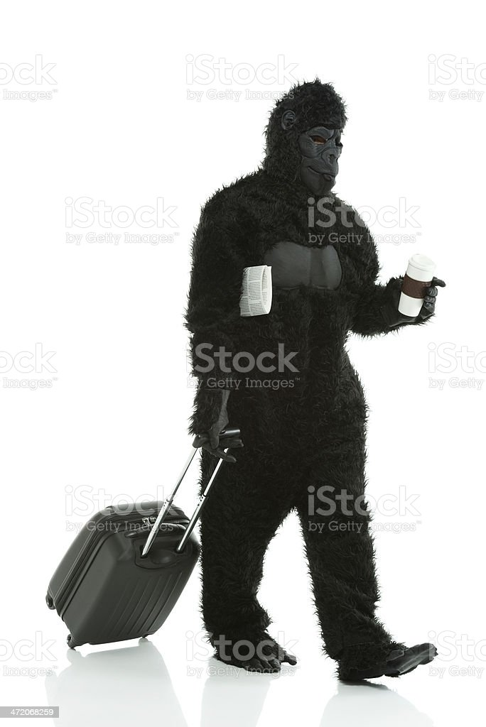 Man in gorilla costume carrying suitcase royalty-free stock photo