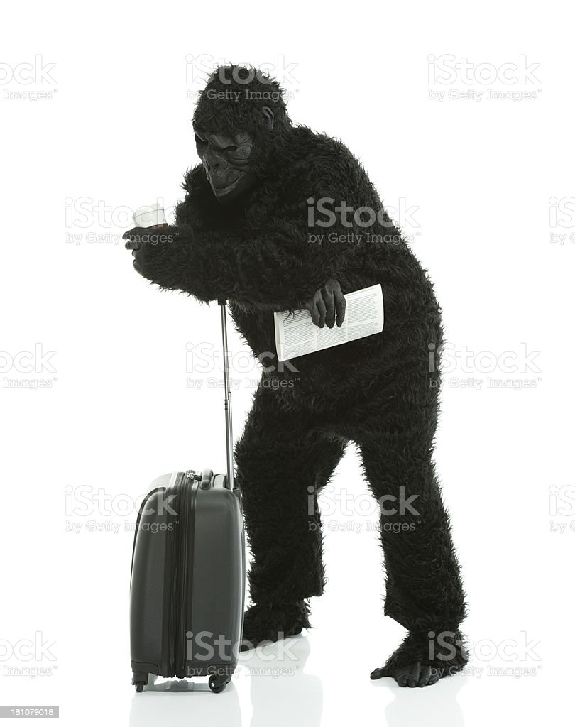 Man in gorilla costume with a suitcase royalty-free stock photo
