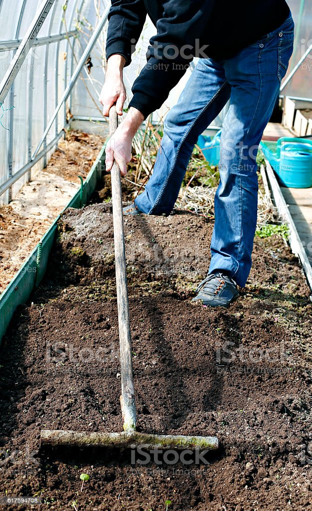 Man in greenhouse leveled the soil with a rake stock photo