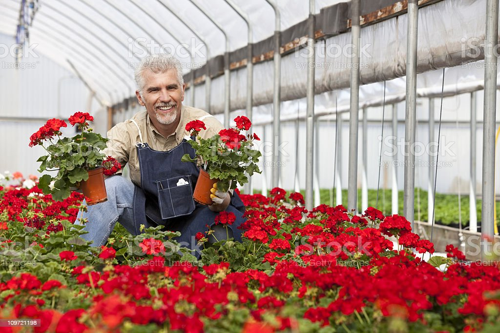 Man in greenhouse royalty-free stock photo