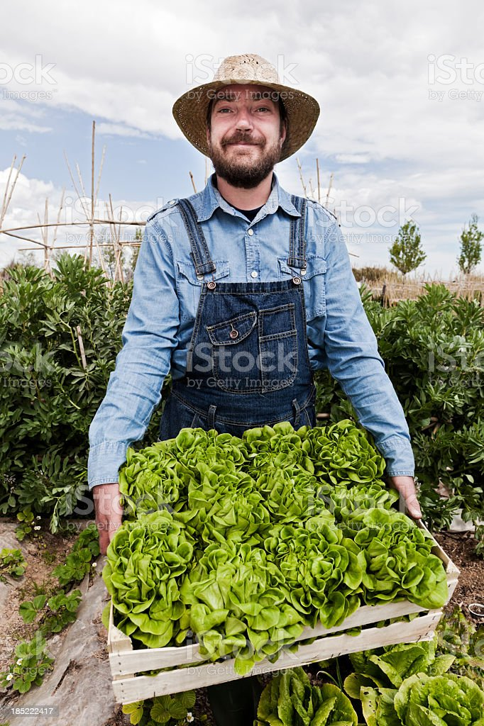 Man in overalls holding wooden crate of lettuce in garden royalty-free stock photo