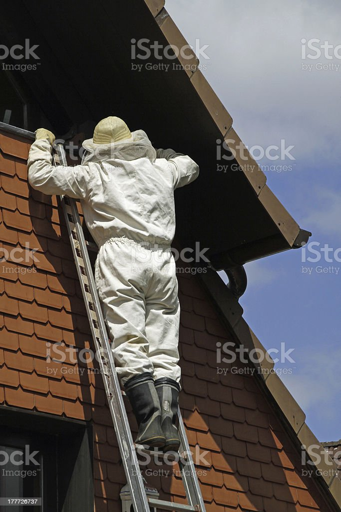 Man in protective suit settled Hornets to stock photo