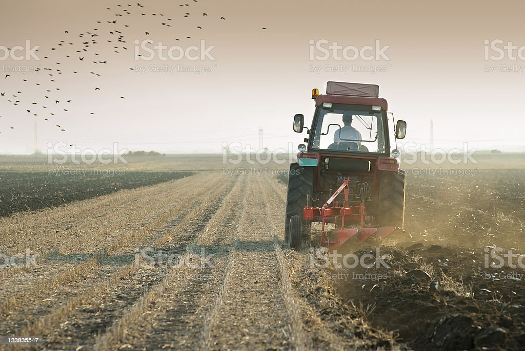 Man in red tractor plows field with birds in sky royalty-free stock photo
