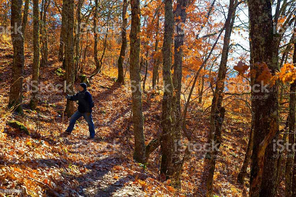 Man in the autumn ladscape royalty-free stock photo